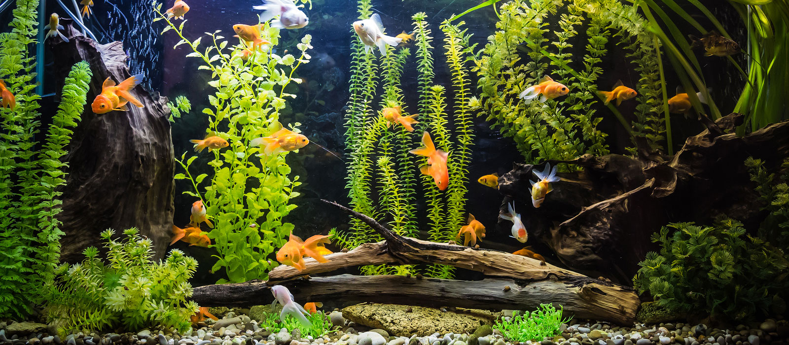 Freshwater fish tank upkeep -  Custom Fresh Water Aquarium Design
