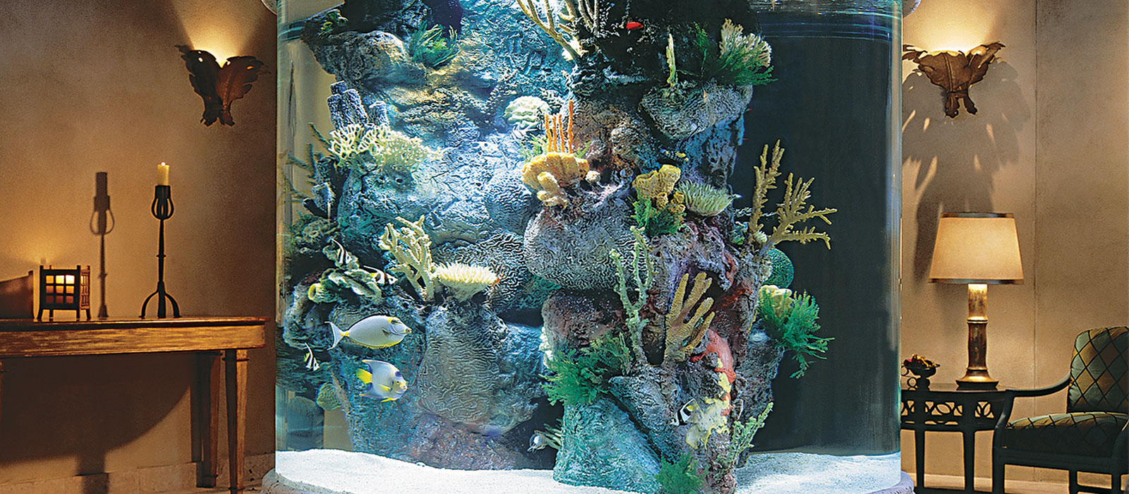 living colours aquarium