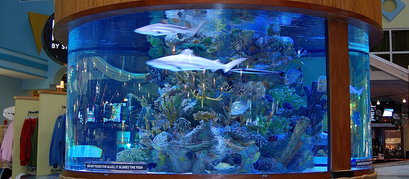 Concept design home home aquarium sharks photos for Shark fish tank