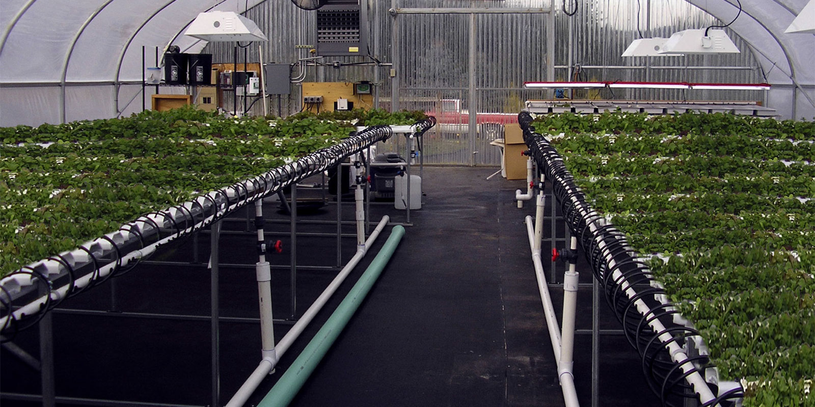 Hydroponic & Aquaponic Growing