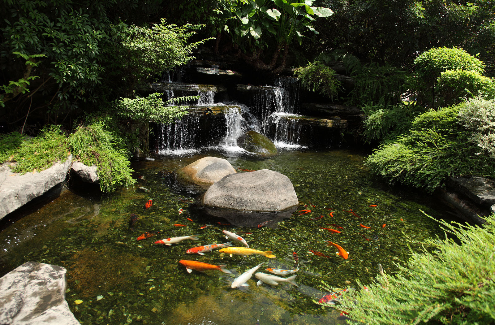 Ponds Backyard Photos :  garden and koi pond koi pond with waterfall tropical zen garden pond