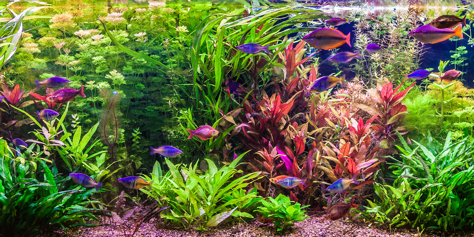 Custom Fresh Water Aquariums
